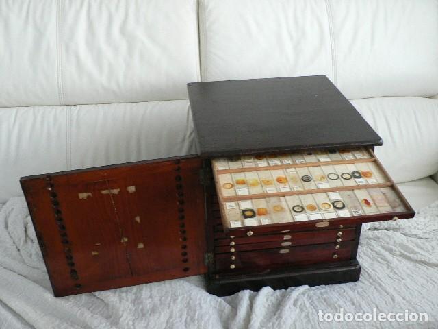 Antigüedades: MICROSCOPIO, CABINET PARA PREPARACIONES MICROSCÓPICAS c. 1880 - Foto 13 - 142601034