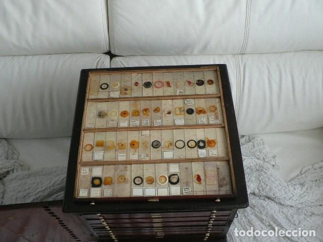 Antigüedades: MICROSCOPIO, CABINET PARA PREPARACIONES MICROSCÓPICAS c. 1880 - Foto 14 - 142601034