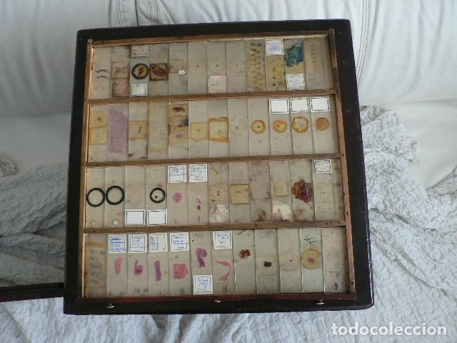 Antigüedades: MICROSCOPIO, CABINET PARA PREPARACIONES MICROSCÓPICAS c. 1880 - Foto 16 - 142601034
