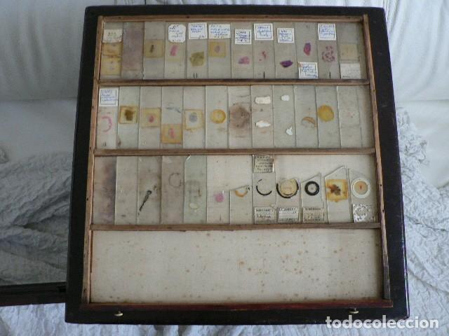 Antigüedades: MICROSCOPIO, CABINET PARA PREPARACIONES MICROSCÓPICAS c. 1880 - Foto 18 - 142601034