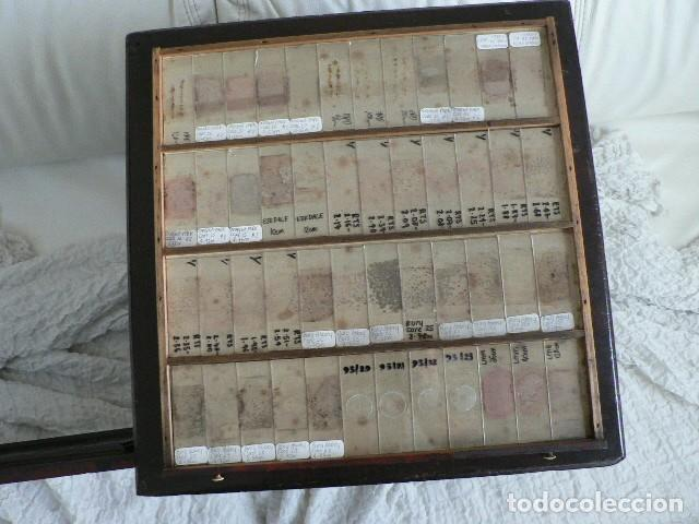 Antigüedades: MICROSCOPIO, CABINET PARA PREPARACIONES MICROSCÓPICAS c. 1880 - Foto 19 - 142601034