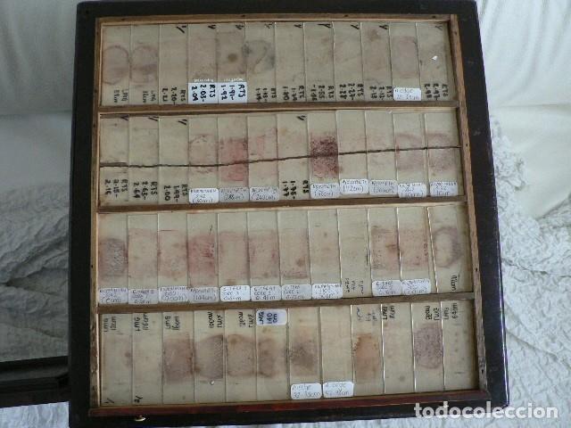 Antigüedades: MICROSCOPIO, CABINET PARA PREPARACIONES MICROSCÓPICAS c. 1880 - Foto 20 - 142601034