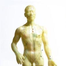 Antiquitäten - 1960c - Modelo anatómico de acupuntura china en látex. - 145151790