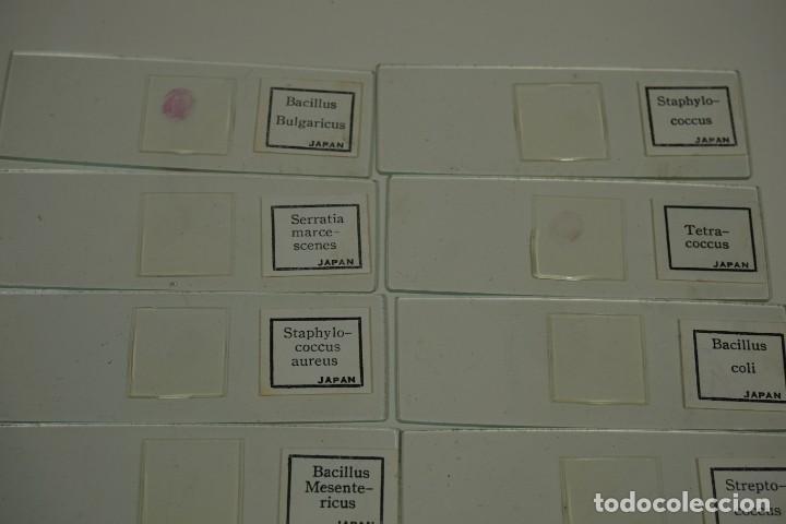 Antigüedades: MICROSCOPIO. COLECCIÓN DE PREPARACIONES MICROSCÓPICAS: BACTERIA - Foto 6 - 164730406