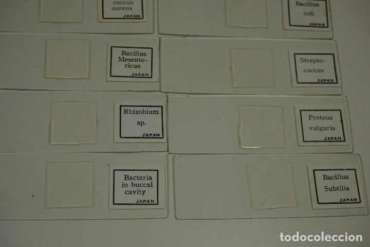 Antigüedades: MICROSCOPIO. COLECCIÓN DE PREPARACIONES MICROSCÓPICAS: BACTERIA - Foto 7 - 164730406