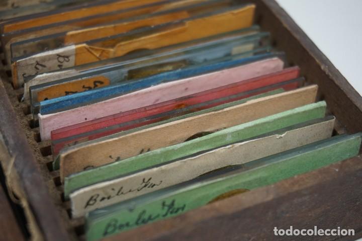 Antigüedades: MICROSCOPIO. ANTIGUA COLECCIÓN DE 24 PREPARACIONES MICROSCÓPICAS c.1870 - Foto 6 - 164730782
