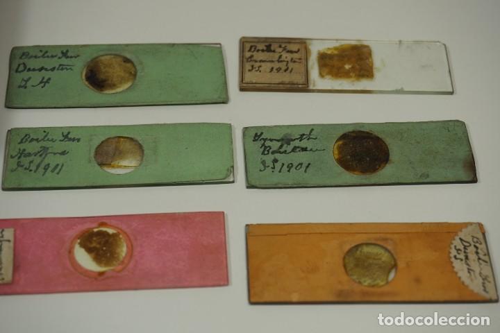 Antigüedades: MICROSCOPIO. ANTIGUA COLECCIÓN DE 24 PREPARACIONES MICROSCÓPICAS c.1870 - Foto 8 - 164730782