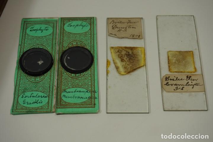 Antigüedades: ANTIGUA COLECCIÓN DE 24 PREPARACIONES MICROSCÓPICAS c.1880 - Foto 6 - 164731210