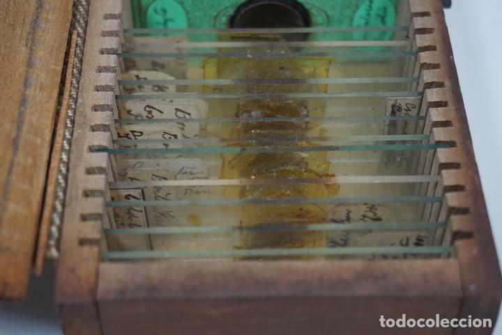 Antigüedades: ANTIGUA COLECCIÓN DE 24 PREPARACIONES MICROSCÓPICAS c.1880 - Foto 7 - 164731210
