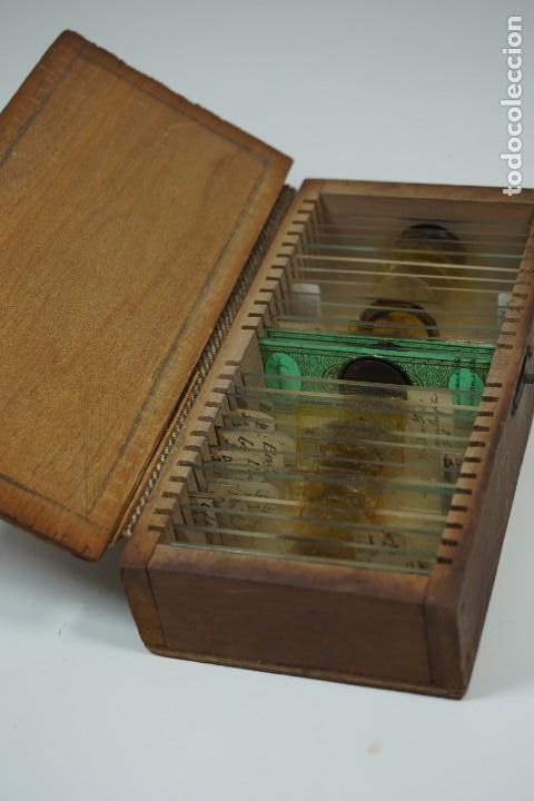 MICROSCOPIO. ANTIGUA COLECCIÓN DE 24 PREPARACIONES MICROSCÓPICAS C.1880 (Antigüedades - Técnicas - Instrumentos Ópticos - Microscopios Antiguos)
