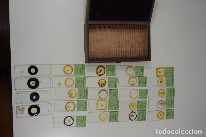 Antigüedades: MICROSCOPIO. ANTIGUA COLECCIÓN DE 24 PREPARACIONES MICROSCÓPICAS c.1880 - Foto 5 - 164731854