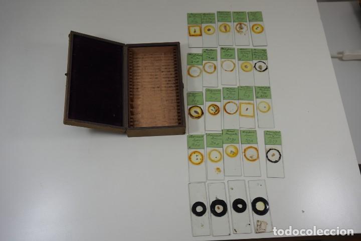 Antigüedades: MICROSCOPIO. ANTIGUA COLECCIÓN DE 24 PREPARACIONES MICROSCÓPICAS c.1880 - Foto 6 - 164731854