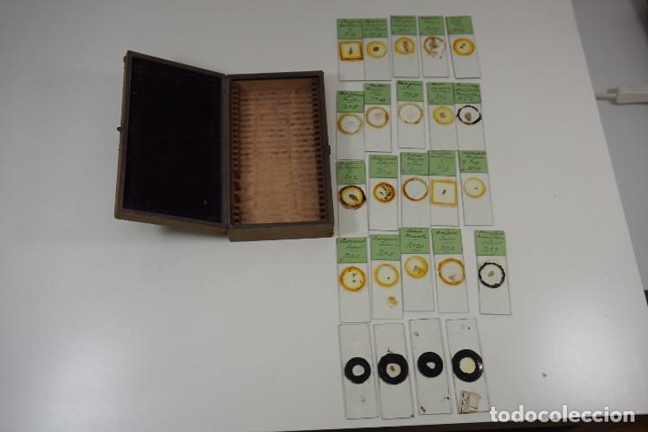 Antigüedades: MICROSCOPIO. ANTIGUA COLECCIÓN DE 24 PREPARACIONES MICROSCÓPICAS c.1880 - Foto 7 - 164731854