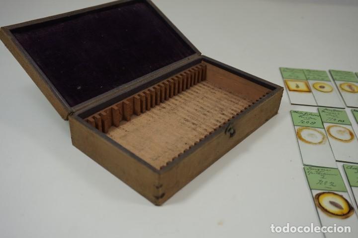 Antigüedades: MICROSCOPIO. ANTIGUA COLECCIÓN DE 24 PREPARACIONES MICROSCÓPICAS c.1880 - Foto 14 - 164731854