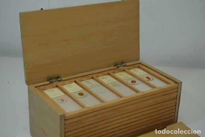 Antigüedades: COLECCIÓN DE 72 PREPARACIONES MICROSCÓPICAS PROFESIONALES BRITÁNICAS c.1950 - Foto 4 - 164733018