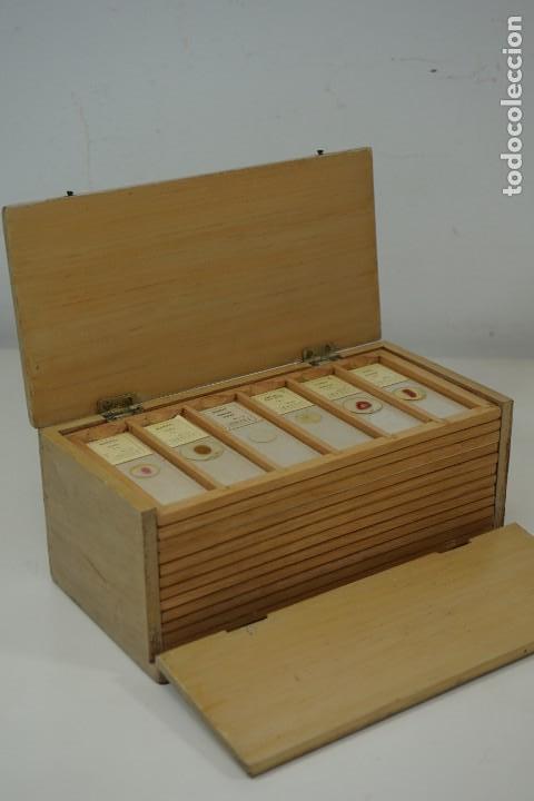Antigüedades: MICROSCOPIO. COLECCIÓN DE 72 PREPARACIONES MICROSCÓPICAS PROFESIONALES BRITÁNICAS c.1950 - Foto 5 - 164733018