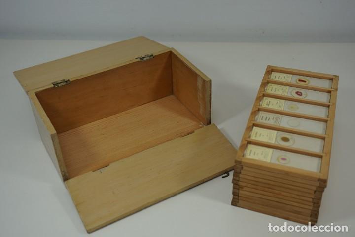 Antigüedades: COLECCIÓN DE 72 PREPARACIONES MICROSCÓPICAS PROFESIONALES BRITÁNICAS c.1950 - Foto 6 - 164733018