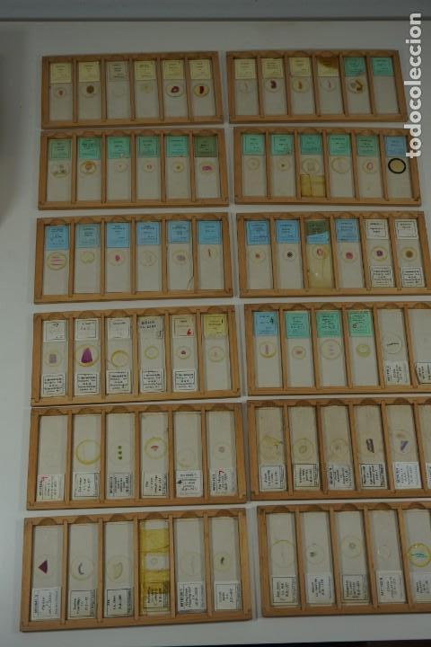 Antigüedades: COLECCIÓN DE 72 PREPARACIONES MICROSCÓPICAS PROFESIONALES BRITÁNICAS c.1950 - Foto 7 - 164733018