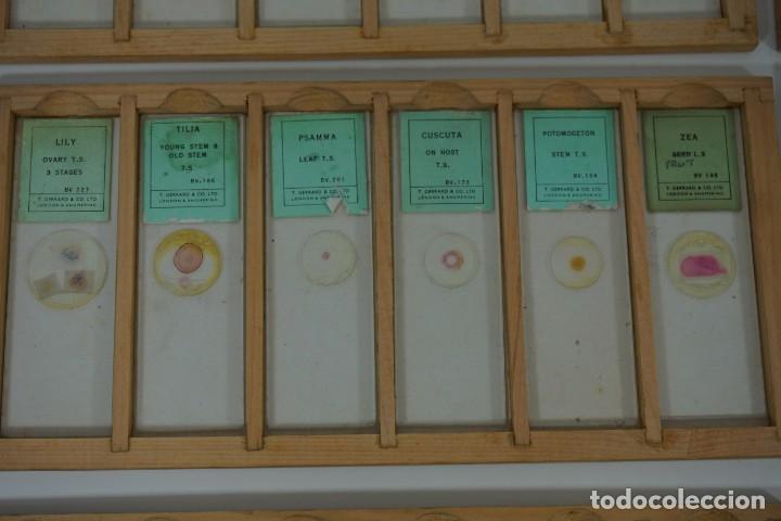 Antigüedades: MICROSCOPIO. COLECCIÓN DE 72 PREPARACIONES MICROSCÓPICAS PROFESIONALES BRITÁNICAS c.1950 - Foto 10 - 164733018