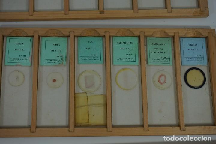 Antigüedades: COLECCIÓN DE 72 PREPARACIONES MICROSCÓPICAS PROFESIONALES BRITÁNICAS c.1950 - Foto 11 - 164733018
