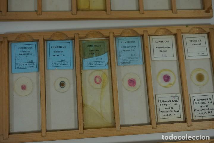 Antigüedades: COLECCIÓN DE 72 PREPARACIONES MICROSCÓPICAS PROFESIONALES BRITÁNICAS c.1950 - Foto 13 - 164733018