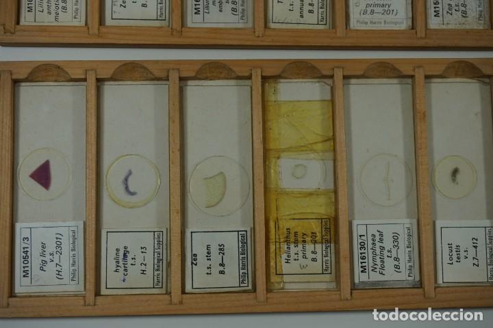Antigüedades: MICROSCOPIO. COLECCIÓN DE 72 PREPARACIONES MICROSCÓPICAS PROFESIONALES BRITÁNICAS c.1950 - Foto 17 - 164733018