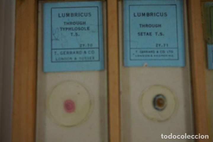 Antigüedades: MICROSCOPIO. COLECCIÓN DE 72 PREPARACIONES MICROSCÓPICAS PROFESIONALES BRITÁNICAS c.1950 - Foto 20 - 164733018