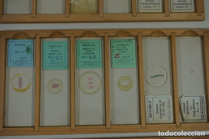 Antigüedades: MICROSCOPIO. COLECCIÓN DE 72 PREPARACIONES MICROSCÓPICAS PROFESIONALES BRITÁNICAS c.1950 - Foto 22 - 164733018