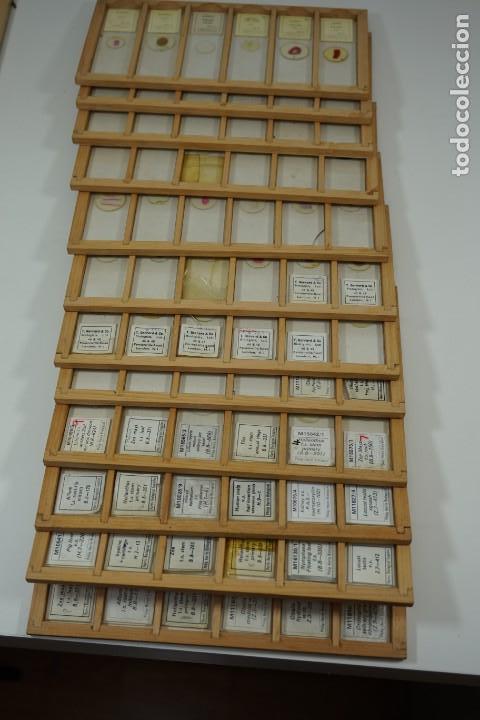 Antigüedades: COLECCIÓN DE 72 PREPARACIONES MICROSCÓPICAS PROFESIONALES BRITÁNICAS c.1950 - Foto 24 - 164733018