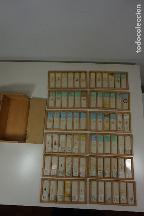 Antigüedades: MICROSCOPIO. COLECCIÓN DE 72 PREPARACIONES MICROSCÓPICAS PROFESIONALES BRITÁNICAS c.1950 - Foto 2 - 164733018