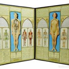 Antigüedades: 1930C - MODELO ANATÓMICO BODYSCOPE - 80CM. DE ANCHO - CON ''VOLVELLES'' (RUEDAS) Y 14 VENTANAS. Lote 170091216