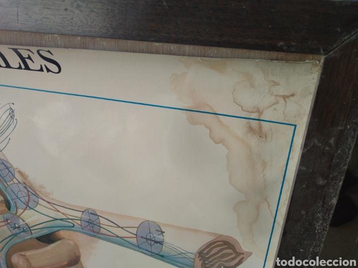 Antigüedades: Cuadro vias opticas y campos visuales - Foto 2 - 170496016