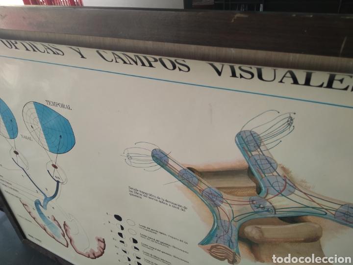 Antigüedades: Cuadro vias opticas y campos visuales - Foto 6 - 170496016