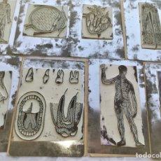 Antigüedades: ANTIGUA IMPRENTA MEDICA ANATOMIA HUMANA Y ORGANOS,AÑOS 30,OCULAR,NERVIOS,DIGESTIVA,MEDICINA FARMACIA. Lote 173816674