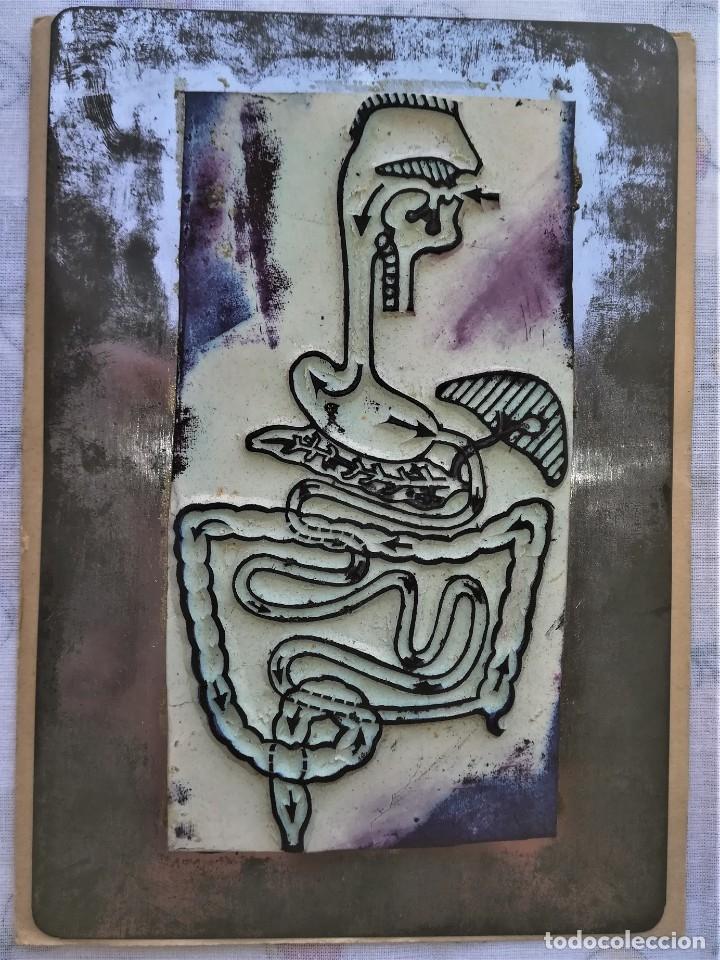 Antigüedades: ANTIGUA IMPRENTA MEDICA ANATOMIA HUMANA Y ORGANOS,AÑOS 30,OCULAR,NERVIOS,DIGESTIVA,MEDICINA FARMACIA - Foto 5 - 173816674