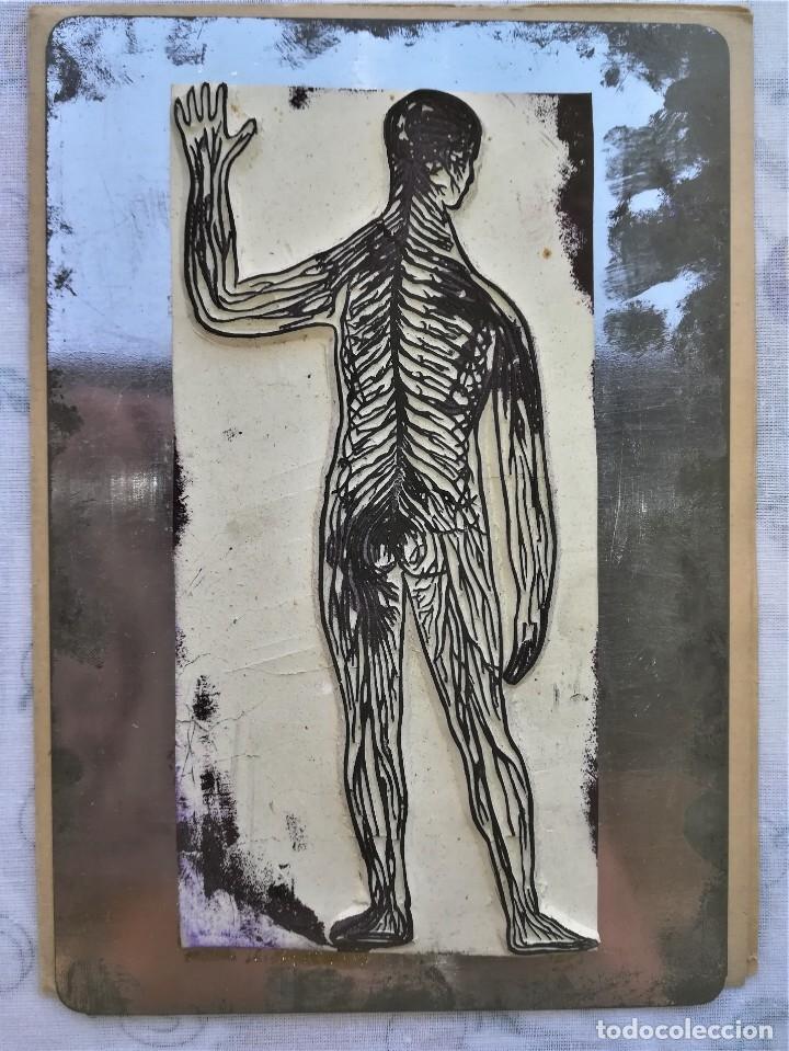 Antigüedades: ANTIGUA IMPRENTA MEDICA ANATOMIA HUMANA Y ORGANOS,AÑOS 30,OCULAR,NERVIOS,DIGESTIVA,MEDICINA FARMACIA - Foto 6 - 173816674