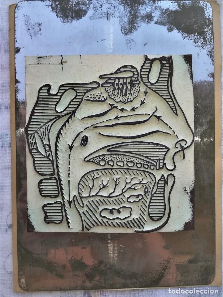 Antigüedades: ANTIGUA IMPRENTA MEDICA ANATOMIA HUMANA Y ORGANOS,AÑOS 30,OCULAR,NERVIOS,DIGESTIVA,MEDICINA FARMACIA - Foto 8 - 173816674