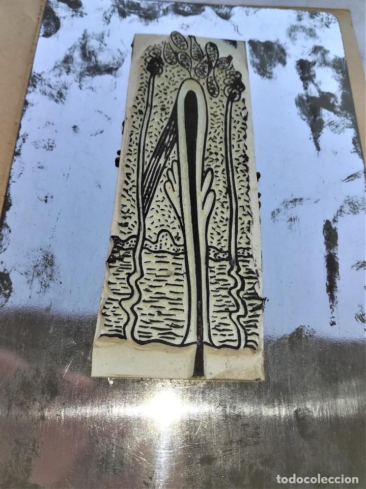 Antigüedades: ANTIGUA IMPRENTA MEDICA ANATOMIA HUMANA Y ORGANOS,AÑOS 30,OCULAR,NERVIOS,DIGESTIVA,MEDICINA FARMACIA - Foto 9 - 173816674