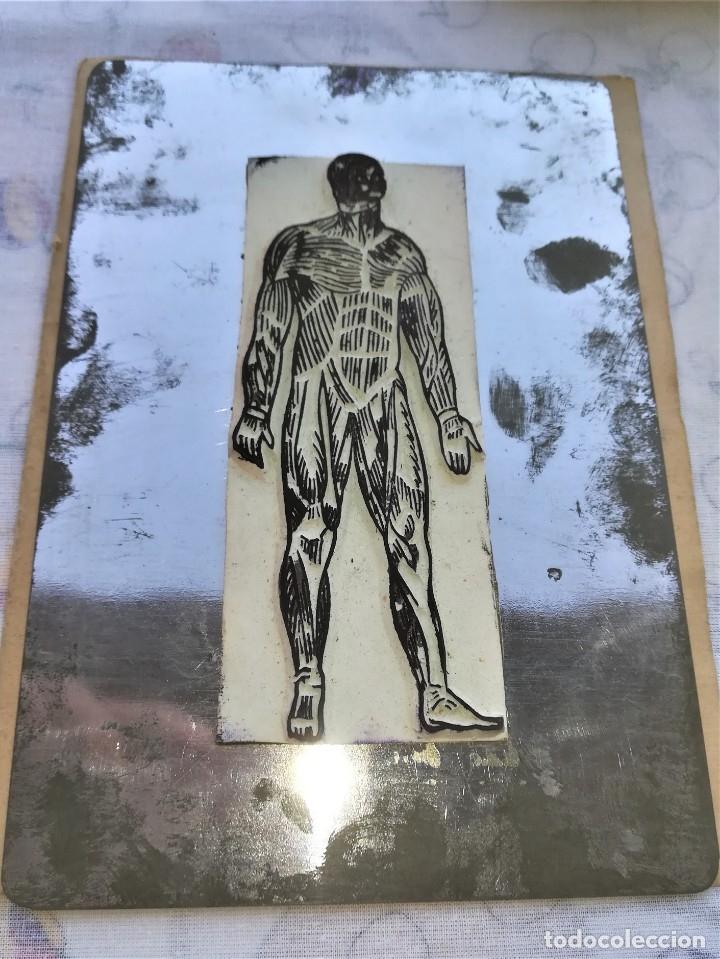 Antigüedades: ANTIGUA IMPRENTA MEDICA ANATOMIA HUMANA Y ORGANOS,AÑOS 30,OCULAR,NERVIOS,DIGESTIVA,MEDICINA FARMACIA - Foto 12 - 173816674