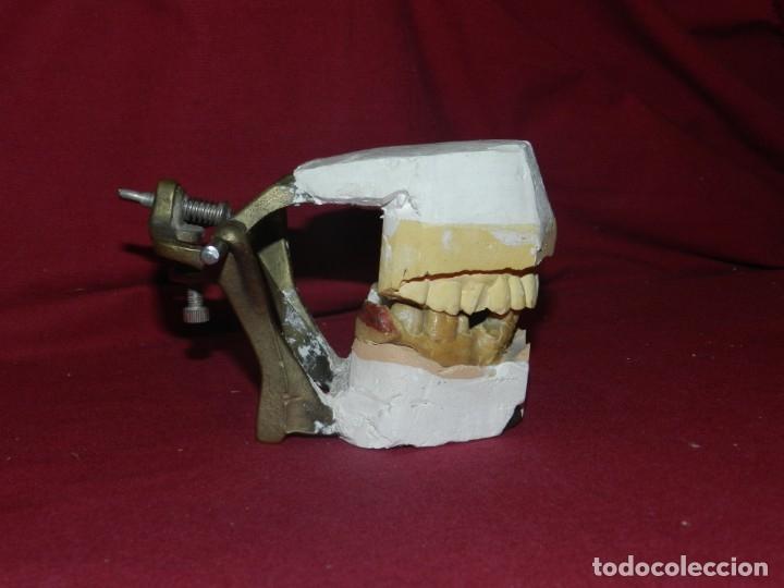 Antigüedades: (M) Dentista - Anatomia Gabinete Médico de la Boca, Antiguo, 9x13x11,5 cm, Señales de Uso - Foto 3 - 175482495