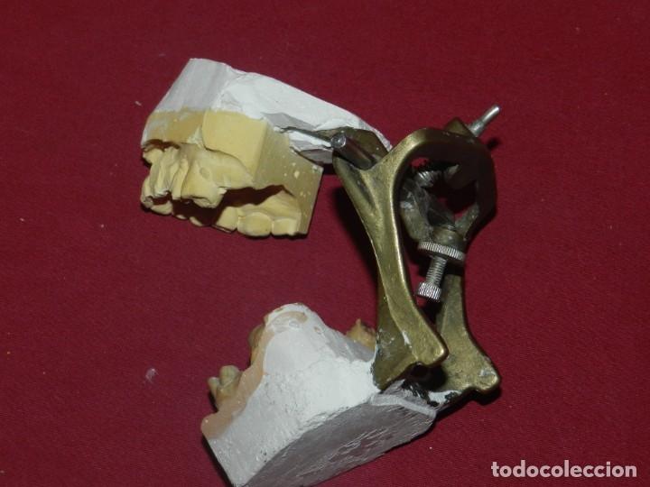 Antigüedades: (M) Dentista - Anatomia Gabinete Médico de la Boca, Antiguo, 9x13x11,5 cm, Señales de Uso - Foto 5 - 175482495