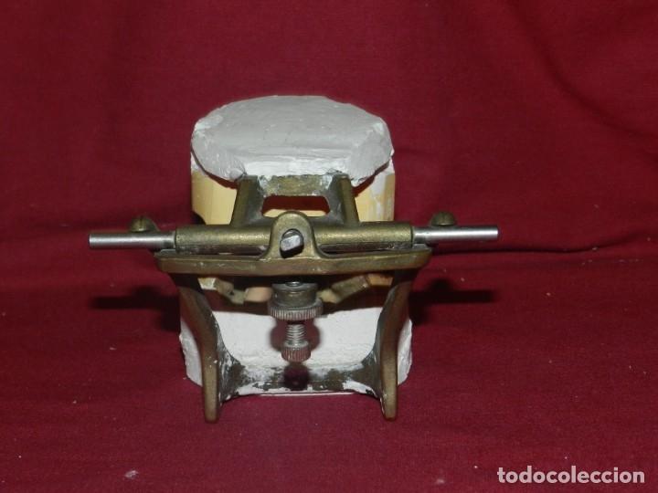 Antigüedades: (M) Dentista - Anatomia Gabinete Médico de la Boca, Antiguo, 9x13x11,5 cm, Señales de Uso - Foto 6 - 175482495