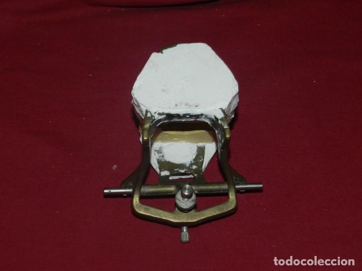 Antigüedades: (M) Dentista - Anatomia Gabinete Médico de la Boca, Antiguo, 9x13x11,5 cm, Señales de Uso - Foto 7 - 175482495