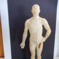 Antigüedades: FIGURA CUERPO HUMANO, MUÑECO DE GOMA PARA ACUPUNTURA DE CHINA, MARCA GOOD HEALTH BAAND. . Lote 175513884