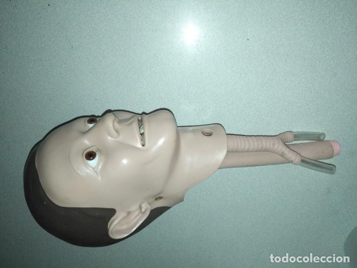 Antigüedades: acepto ofertas - cuerpo anatomia humano cabeza practicas medicina tamaño natual ojos de cristal - Foto 3 - 176369795