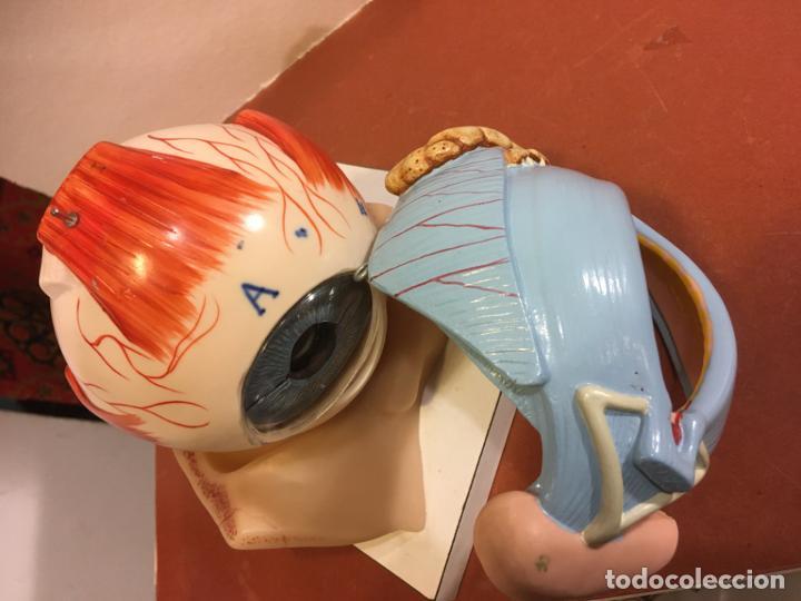 Antigüedades: Modelo anatómico partes del ojo humano, vista. uso escolar año 1985. 17,5x17,5 x 20 cms. - Foto 2 - 194321661