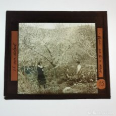 Antigüedades: ANTIGUO CRISTAL LINTERNA MAGICA - EL NOI DOLENT - JOSEP Mª FOLCH TORRES - PRECINEMA - 10X8,5 CM. Lote 198619042