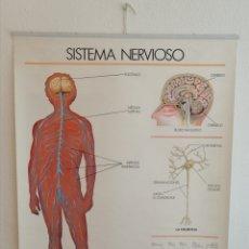Antigüedades: GRAN MURAL SISTEMA NERVIOSO Y SENTIDOS. Lote 201134473