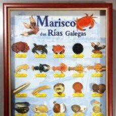 Antigüedades: MARISCOS DAS RIAS GALEGAS. COLECCION. CUADRO. ENMARCADO. LA VOZ DE GALICIA. 53 X 43 CM.. Lote 206253533
