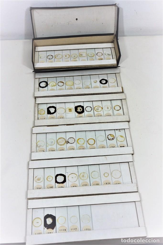 MICROSCOPIO. COLECCIÓN DE 49 PREPARACIONES MICROSCÓPICAS C. 1900 (Antigüedades - Técnicas - Instrumentos Ópticos - Microscopios Antiguos)